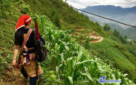 Vietnam Highlights: Trip & Cruise 20 Days - Private
